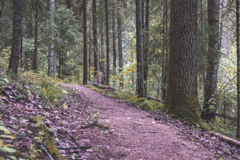 drzewnego bagażnika sylwetki w zielonym lesie - rocznika retro spojrzenie obraz stock