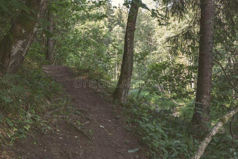 drzewnego bagażnika sylwetki w zielonym lesie - rocznika retro spojrzenie fotografia stock