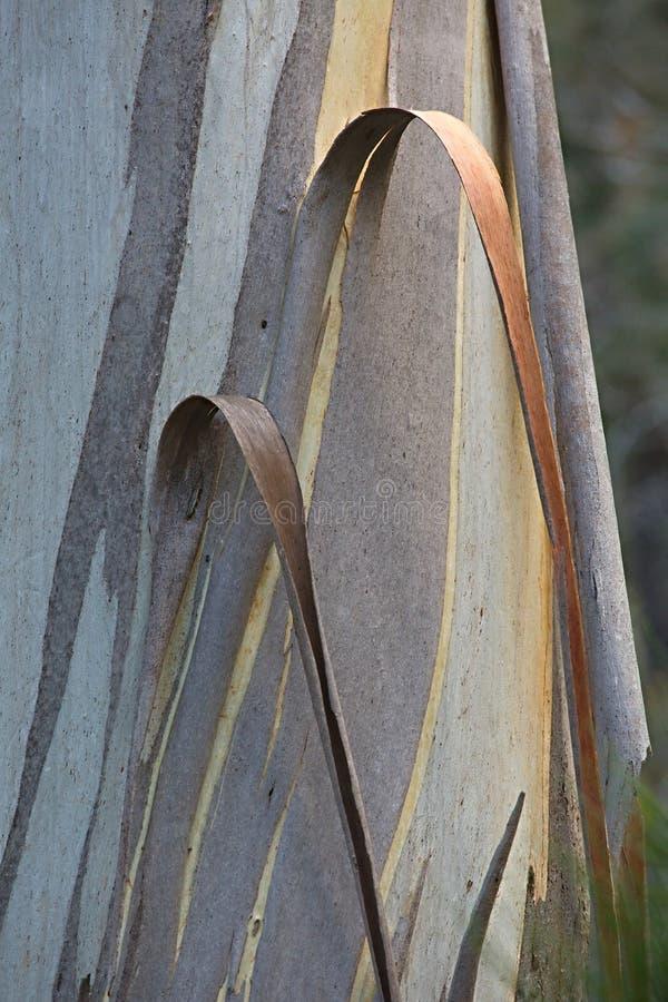 Drzewnego bagażnika zbliżenie fotografia stock