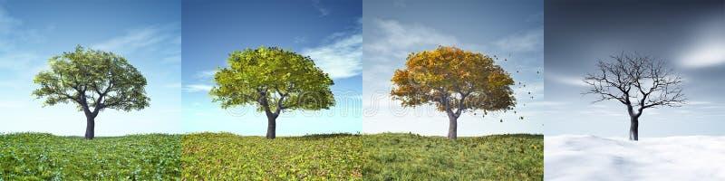 drzewnego cztery sezonu obrazy royalty free