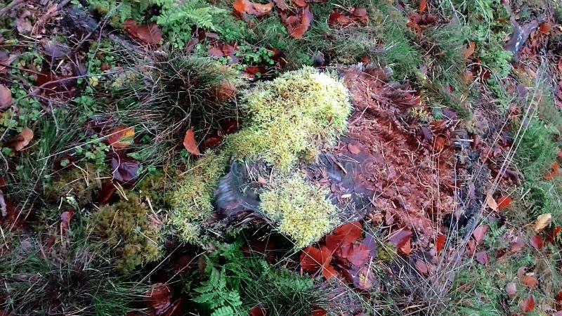 Drzewnego fiszorka Żółty mech na fiszorku jesień błękit długa natura ocienia niebo fotografia stock