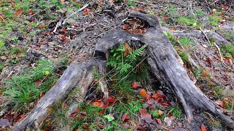 Drzewnego fiszorka Spada natura Piękno natura jesienny dzień opuszczać melancholicznego kolor żółty Zielona trawa zdjęcia royalty free