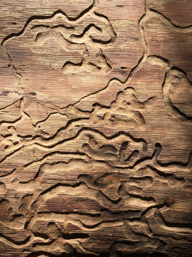 Drzewnego fiszorka tło i tekstury zdjęcie royalty free