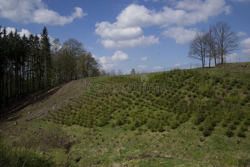 Drzewnego gospodarstwa rolnego pepiniery plantacja obraz royalty free
