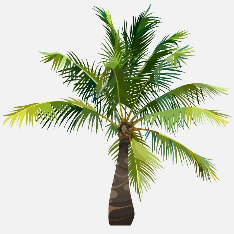 Drzewnego małego zielonego puszystego podesłania kokosowy drzewo royalty ilustracja