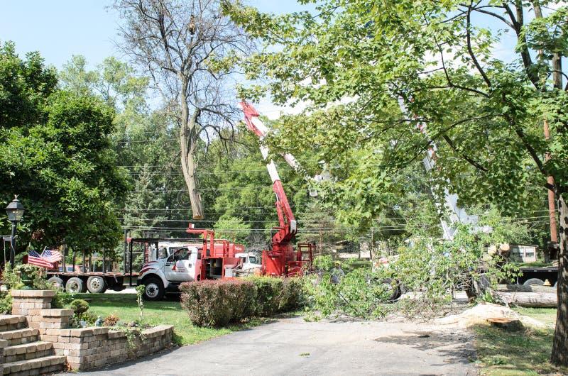 Drzewnego usunięcia ciężarowy kształtować teren obrazy royalty free