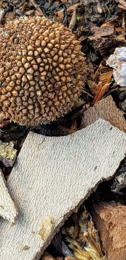 Drzewnej barkentyny i ziarna strąki na lasowej podłodze zdjęcia royalty free