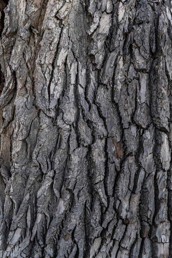 Drzewnej barkentyny tła tekstura zdjęcia royalty free