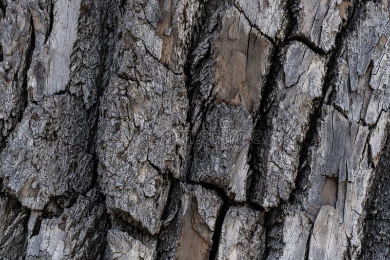 Drzewnej barkentyny t?a tekstura obraz royalty free