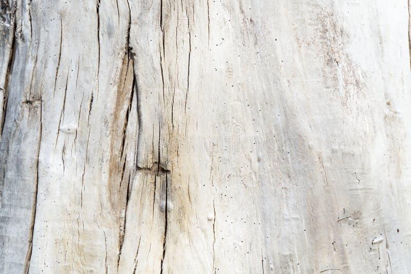 Drzewnej barkentyny t?a tekstura obrazy royalty free