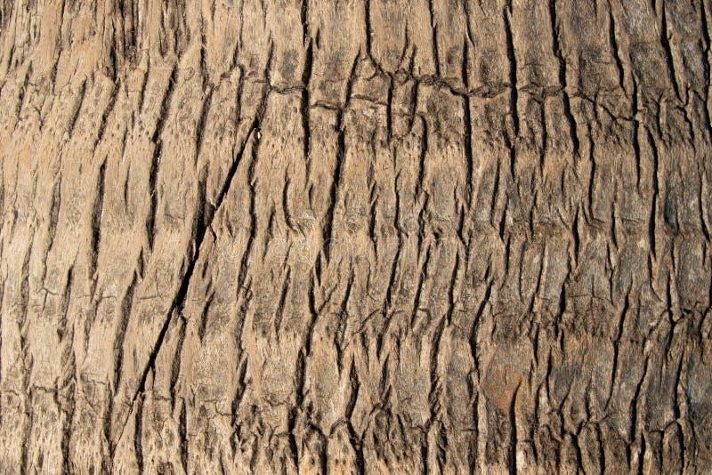 Drzewnej barkentyny tekstura drzewko palmowe obraz royalty free