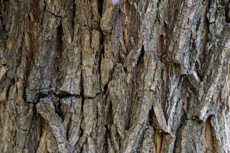 Drzewnej barkentyny tekstury tła zamazana drzewna barkentyna zdjęcie stock