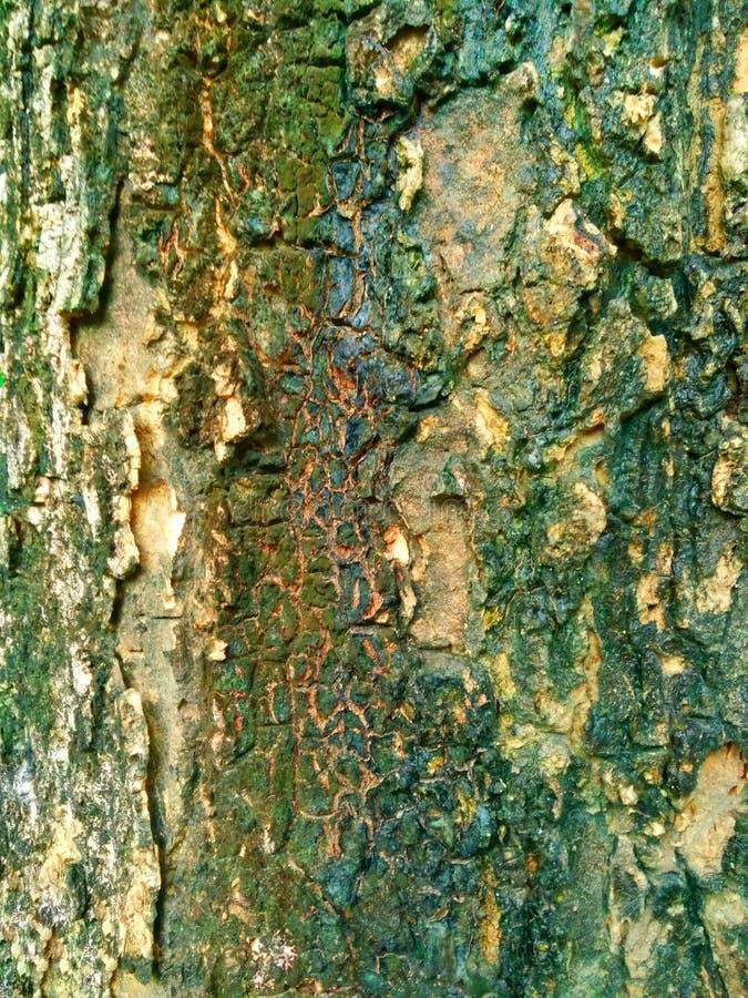 Drzewnej barkentyny tekstury tło zdjęcie stock