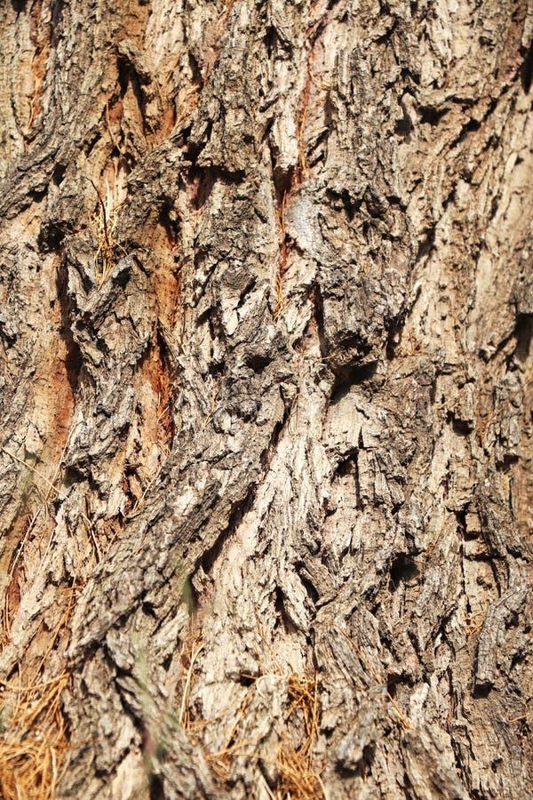 Drzewnej barkentyny tekstury wzór zdjęcie stock