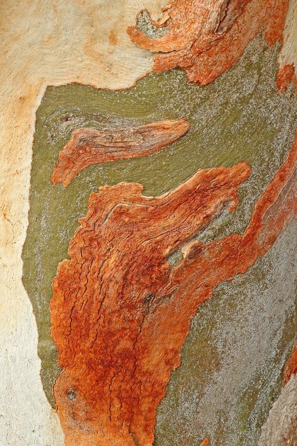 Drzewnej barkentyny textured deseniujący tło obraz stock