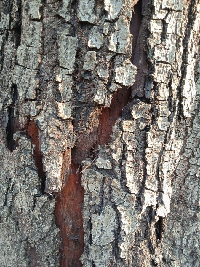 Drzewnej barkentyny textured tło, natura krajobraz zdjęcie stock