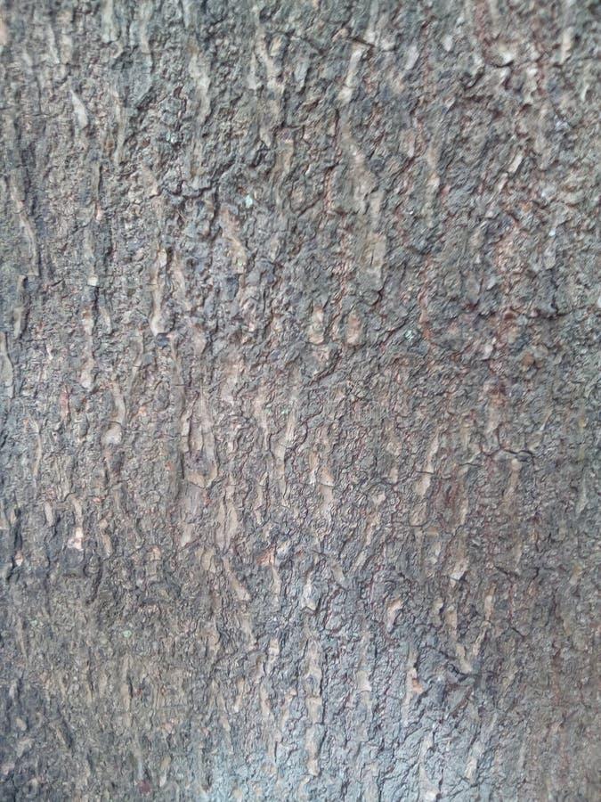 Drzewnej barkentyny vertical zdjęcia royalty free