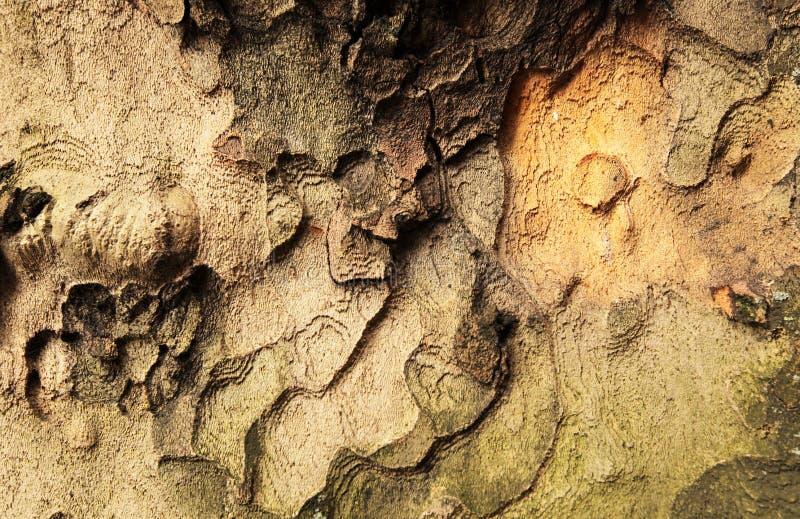 Drzewnej barkentyny wzór zdjęcie stock