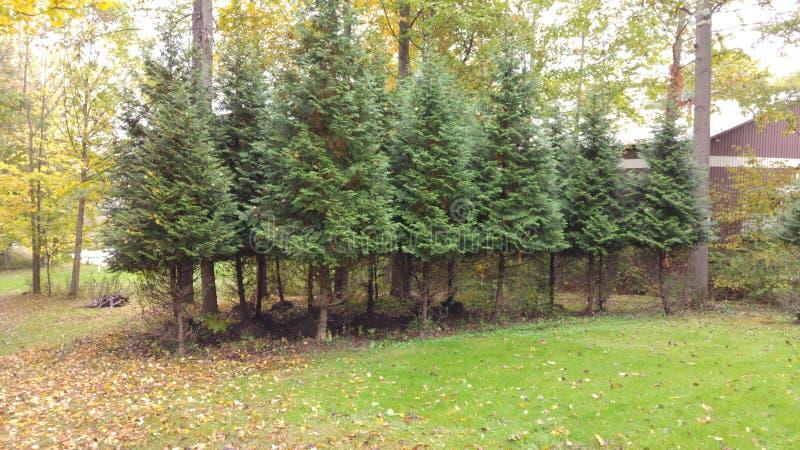 Drzewnej pepiniery chwyt niektóre świezi ogienie czeka zasadzającym zdjęcia stock