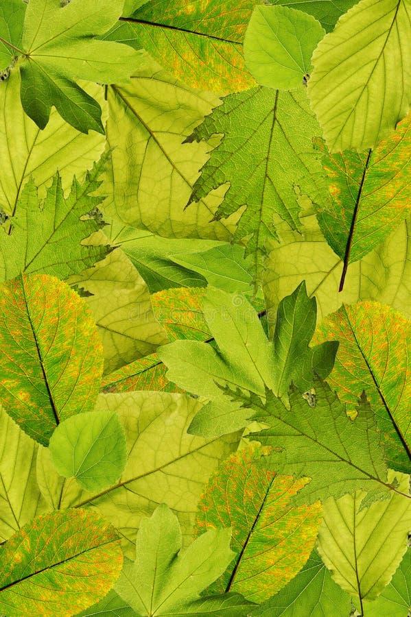 drzewni świezi tło liść obrazy royalty free