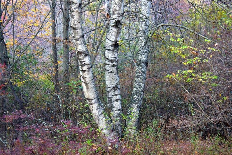 Download Drzewni Bagażniki Fotografia Royalty Free - Obraz: 6991237