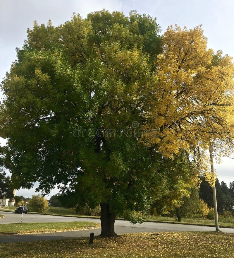 Drzewni Colours obrazy stock