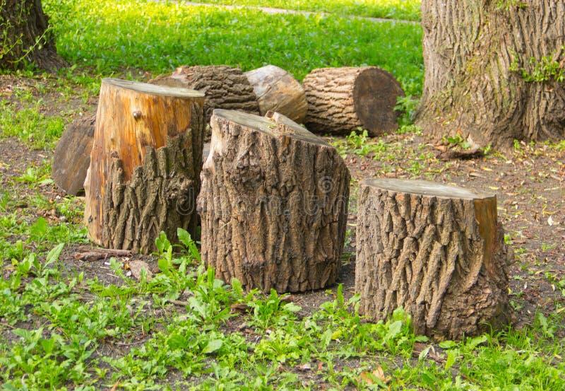 Drzewni fiszorki, wylesienie obrazy royalty free