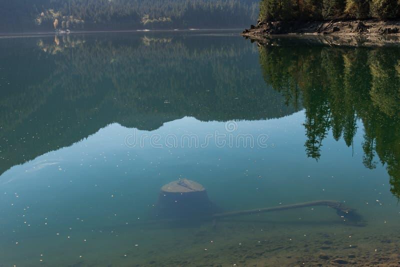 Drzewni fiszorki zanurzali w jasnej wodzie Piekarniany jezioro w Północnych kaskadach obrazy stock