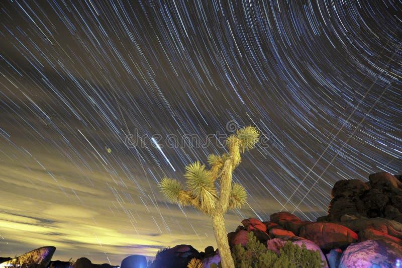 drzewni gwiazdowi California ślada Joshua zdjęcia royalty free