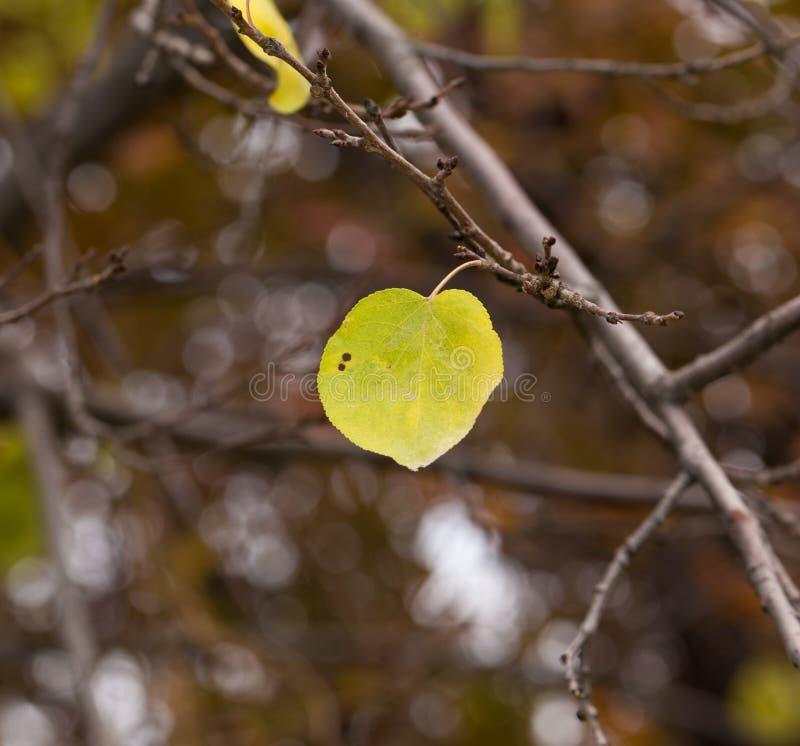 drzewni jesień liść obraz royalty free