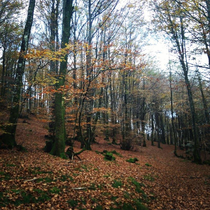 Drzewni jesień liście fotografia stock