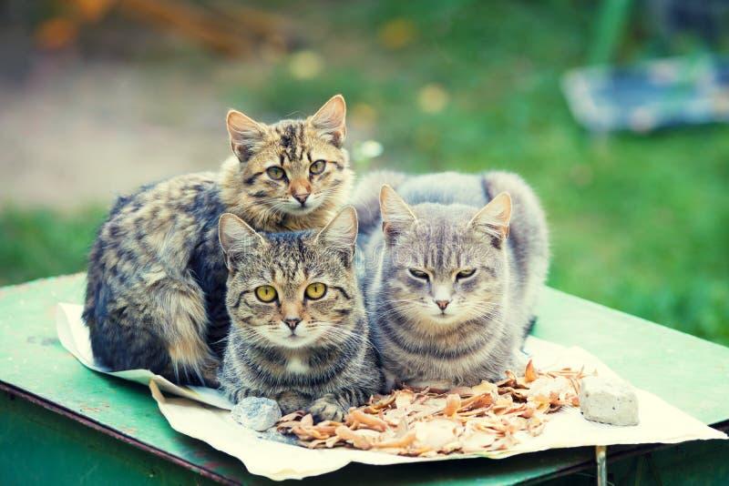 Drzewni koty kłama w ogródzie obraz royalty free