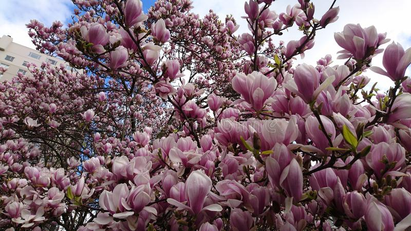 Drzewni kwiaty fotografia royalty free