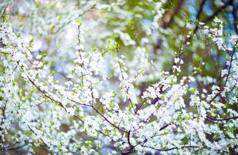 drzewni kwitnący kwiaty obraz stock
