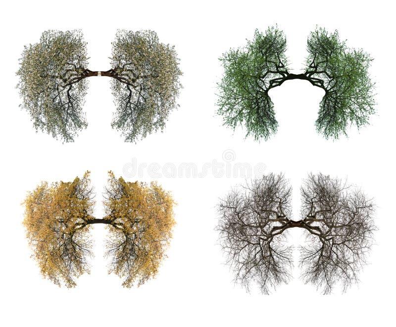 Drzewni płuca obrazy royalty free
