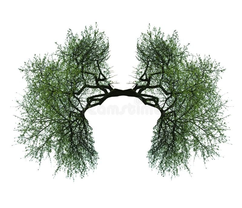 Drzewni płuca fotografia stock