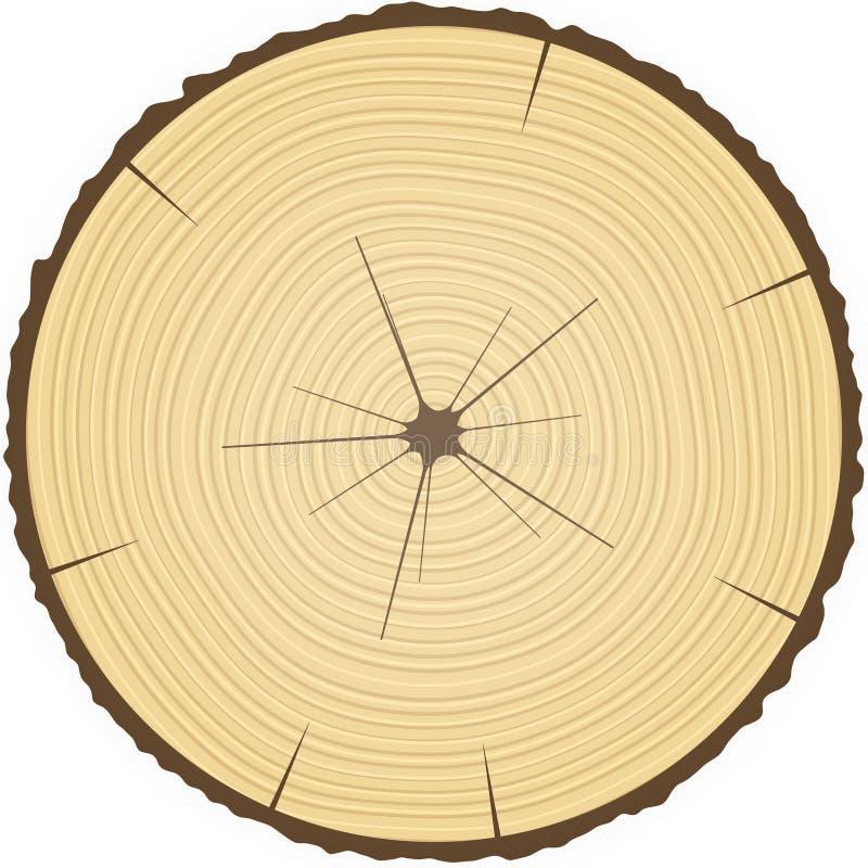 Drzewni pierścionki. ilustracji