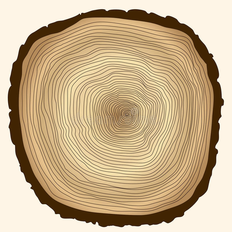 Drzewni pierścionki, rżnięty fiszorek ilustracji