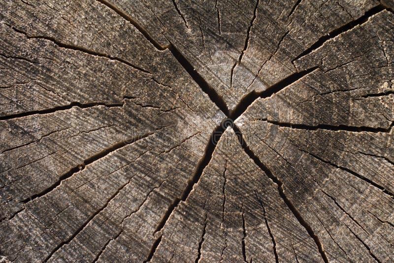 Drzewni pierścionki z głębokim pęknięciem obrazy stock