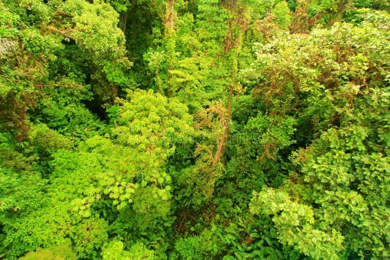 Drzewni wierzchołki obraz royalty free