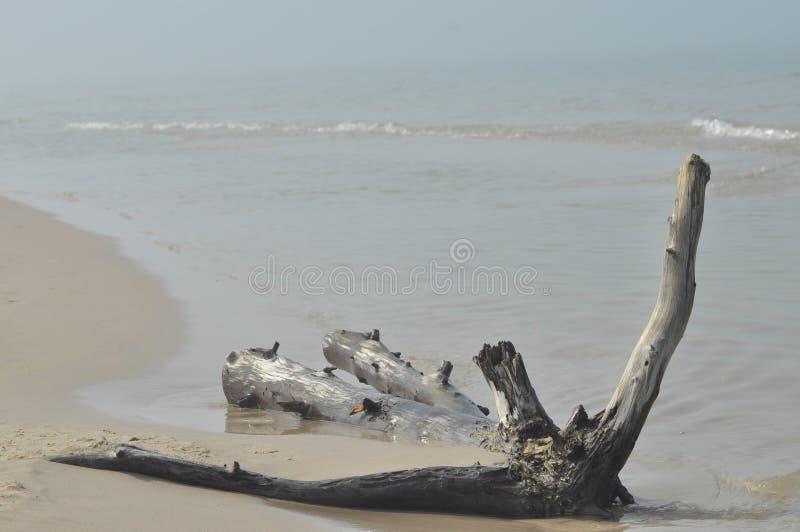 Drzewny bagażnik rzucający falami morze Piasek w pustyni w Slowinski parku narodowym, turystyka obraz royalty free