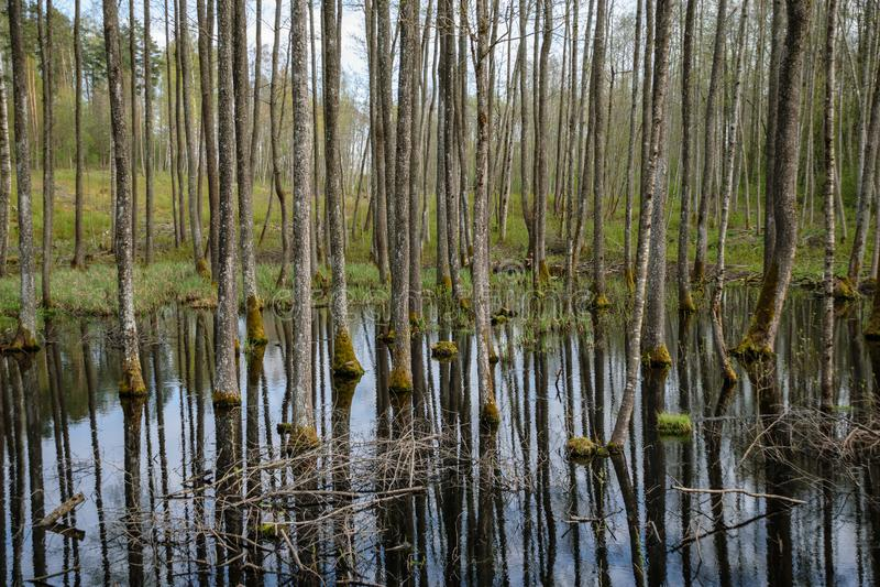drzewny bagażnik textured tło wzór w wodnym stawie fotografia stock