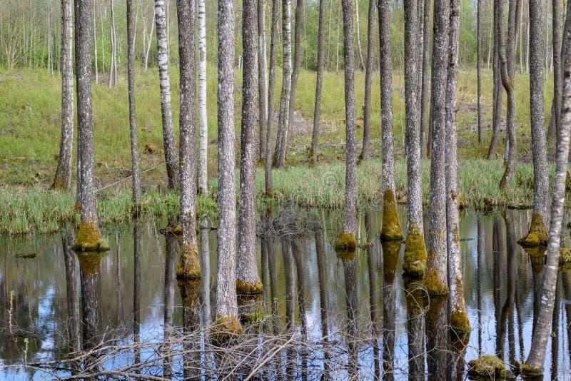 drzewny bagażnik textured tło wzór w wodnym stawie zdjęcia stock