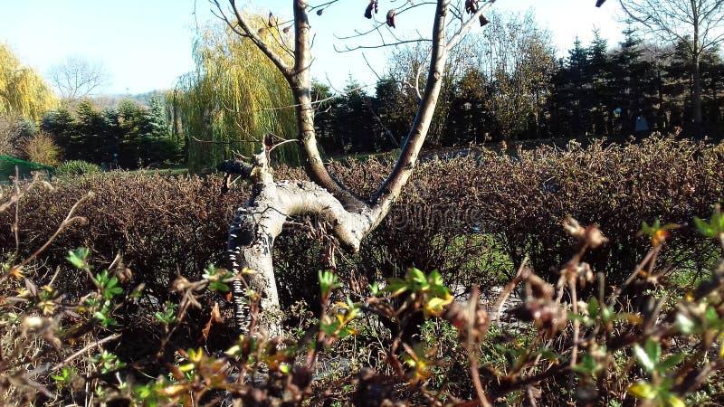 Drzewny bagażnik w wczesnej jesieni zdjęcie royalty free