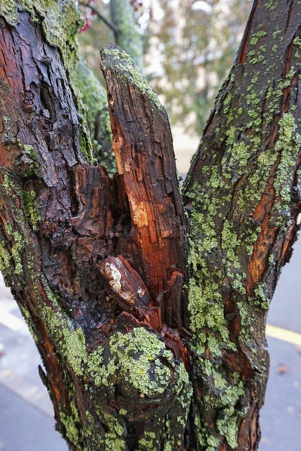 Drzewny bagażnik z grzybem w jesieni zdjęcie stock
