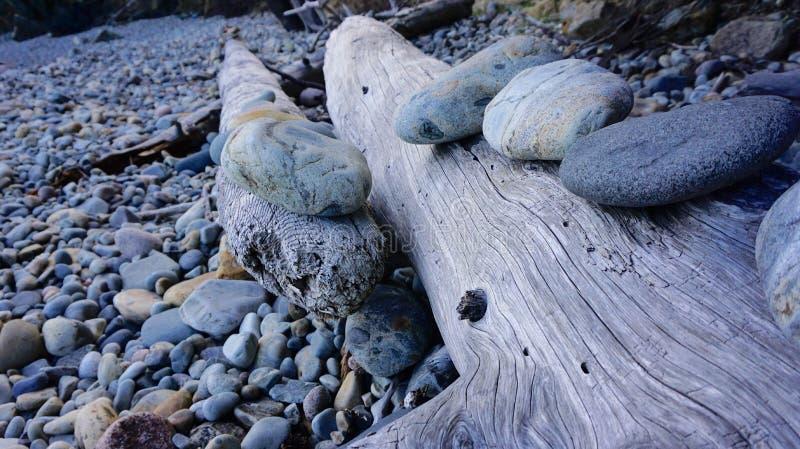 Drzewny bagażnik z skałami obrazy stock
