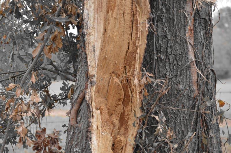Drzewny bagażnik z unikalnymi kolorami liście obraz stock