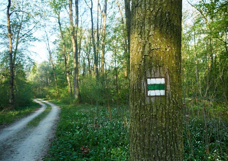 Drzewny bagażnik z zielonym turystą podpisuje wewnątrz lasowego Footpath z krzywą na wiosna dniu zdjęcia stock