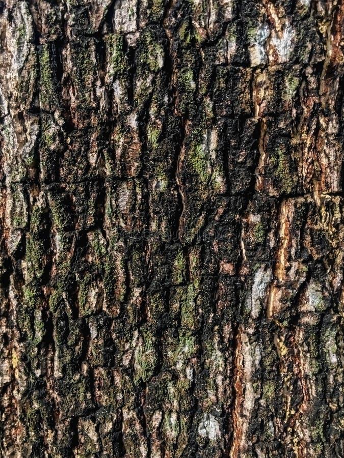Drzewny brązu, zielonego i czarnego tło, fotografia royalty free