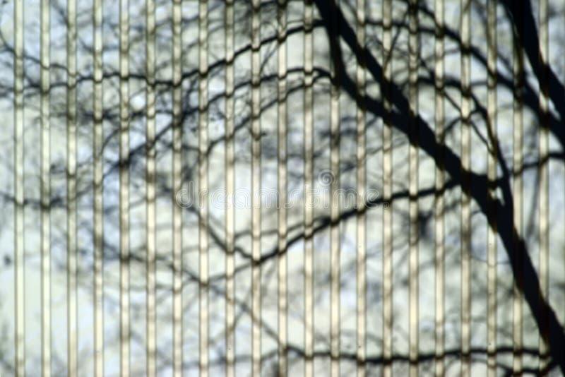 Drzewny cień na checker talerzu obraz royalty free